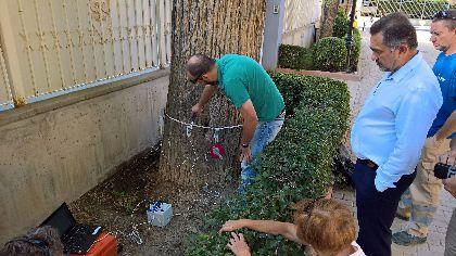 Lorca contará con su primer catálogo del Patrimonio Arbóreo para mejorar el mantenimiento de los árboles más destacados