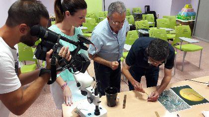 La supervisión de la Concejalía de Sanidad mantiene en niveles ínfimos la presencia del mosquito tigre en Lorca