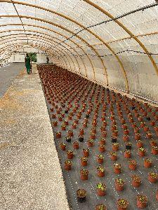 El Vivero Municipal ya prepara las 7.000 plantas que adornarán los parques y jardines del municipio en otoño