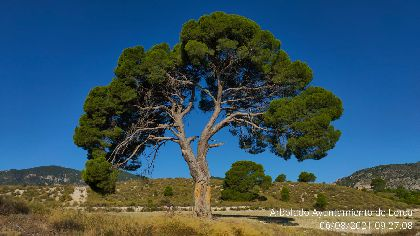 El Ayuntamiento actualiza el catálogo de árboles con la revisión de 44 ejemplares monumentales y otros 73 singulares