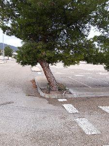 La Concejalía de Deportes de Lorca apuesta por el cuidado y la protección del arbolado del Complejo Deportivo Artés Carrasco