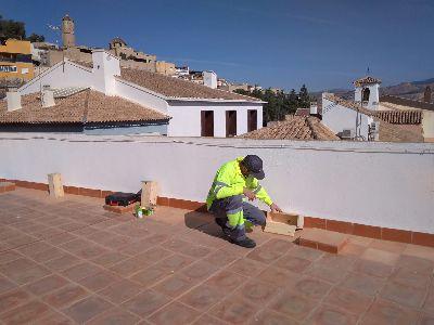 El Ayuntamiento de Lorca instala 25 casas nido en diversos edificios municipales para facilitar la cría del vencejo