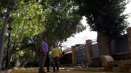 Una falsa platanera de 35 metros de altura, un olivo de 5,3 metros de diámetro troncal y el enebro de Alcoluche, entre los ejemplares destacados del Catálogo Municipal de Árboles