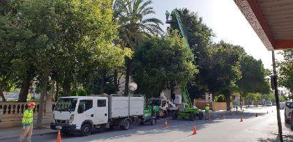 El Ayuntamiento lleva a cabo una revisión exhaustiva del arbolado urbano para evitar caídas de ramas