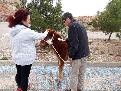 Un pony abandonado en las inmediaciones de Los Pilones encuentra un hogar gracias a la rápida actuación de los profesionales de la Concejalía de Sanidad