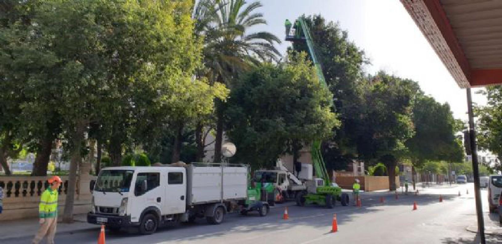El Ayuntamiento lleva a cabo una revisión exhaustiva del arbolado urbano de gran porte para prevenir caídas de ramas